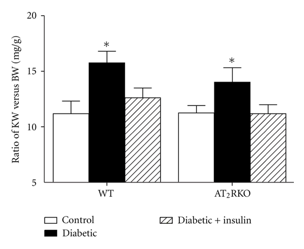 (c) Ratio of KW/BW in 16-week-old mice