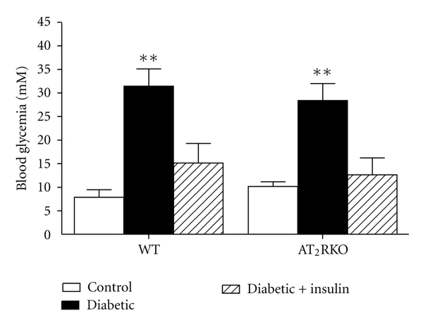 (d) Blood glycemia in 16-week-old mice