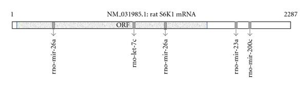 654904.fig.002a
