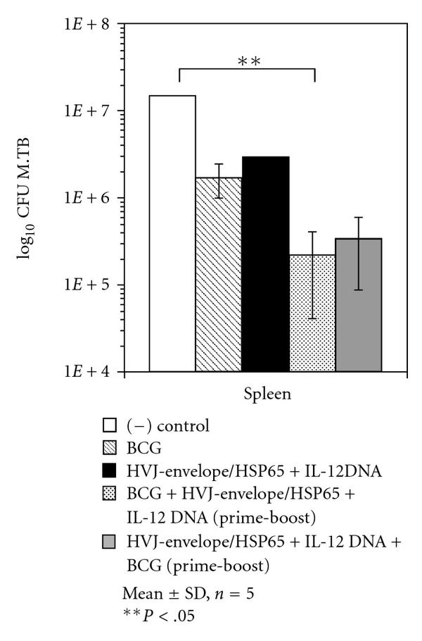 (PDF) A Mycobacterium bovis BCG-Naked DNA Prime-Boost