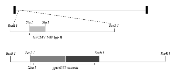 906948.fig.001a