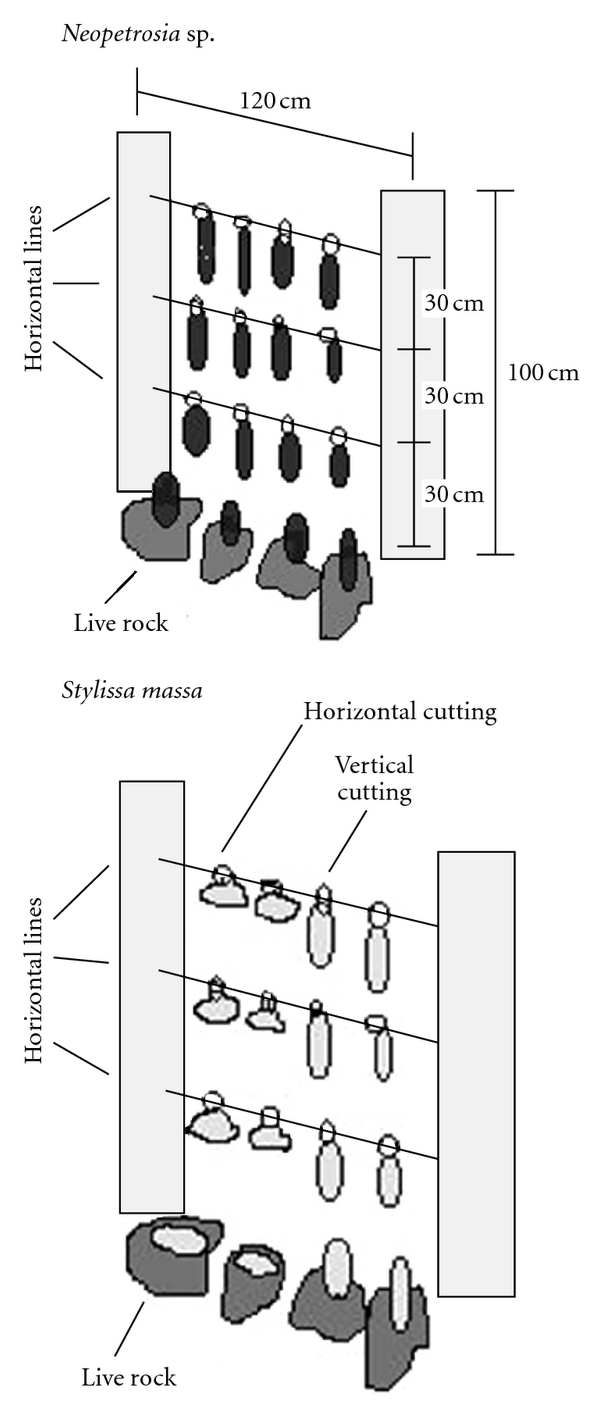 417360.fig.004
