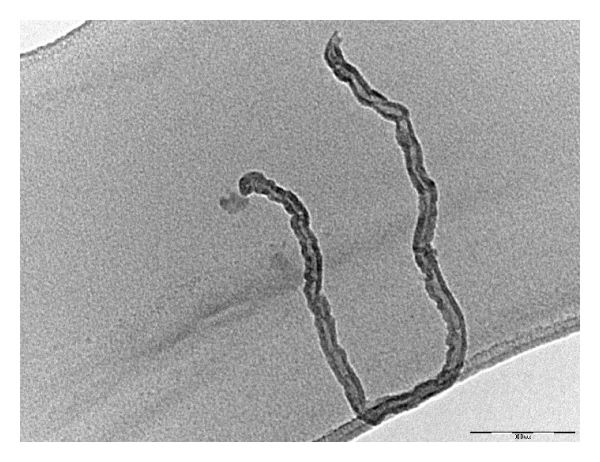 (e) Isolated carbon nanotubes (scale 100 nm)