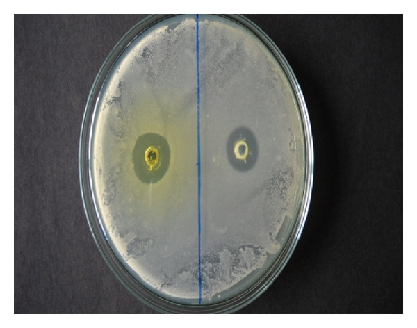 (e) Zone of inhibition of test compounds 2c (L) and 2d (R) against E. coli