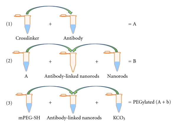 (a) Gold nanorod conjugation to antibody followed by PEGylation