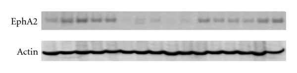 951917.fig.006a