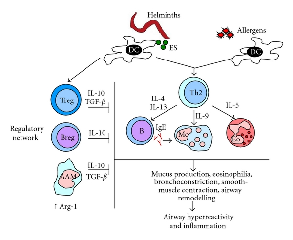 helminth infection and inflammation)