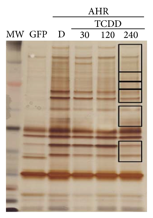(c) Protein sample separation