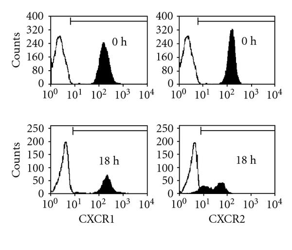 (c) Surface expression of the IL-8 receptors CXCR1 and CXCR2 on freshly isolated and cultured (37°C, 18 hours) human granulocytes. Fluorescence histograms of a representative experiment are shown