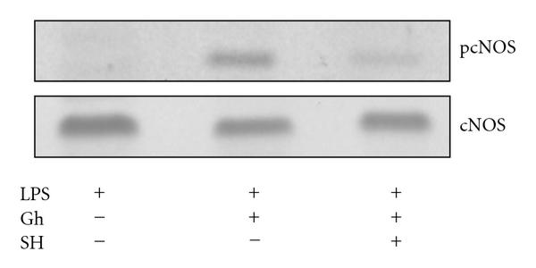 280464.fig.007