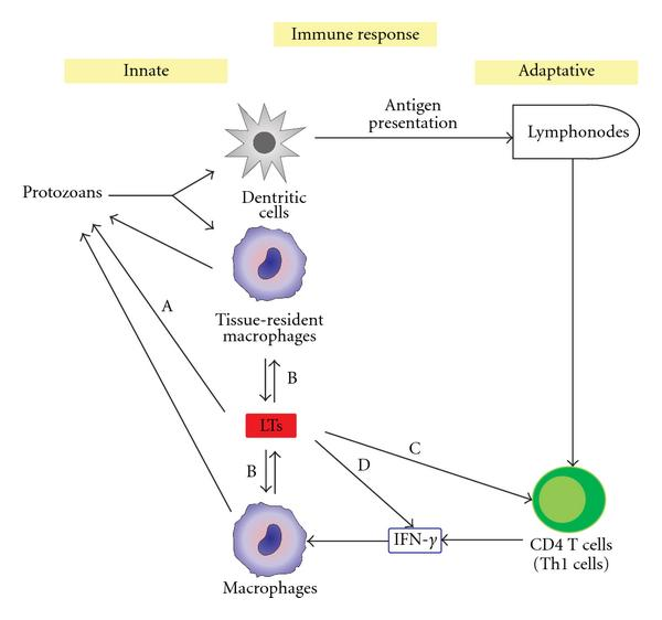 helminth and protozoan infection)