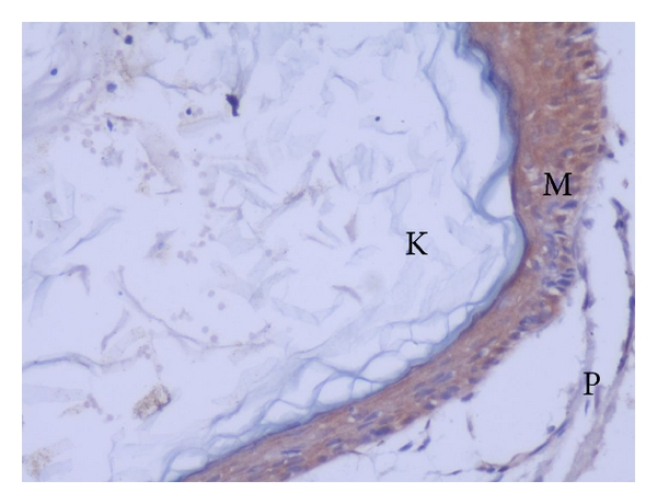 651207.fig.002a