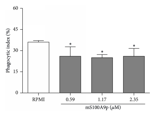 (a) Phagocytic activity of BMDM cocultivated with B-1 cells, with direct contact