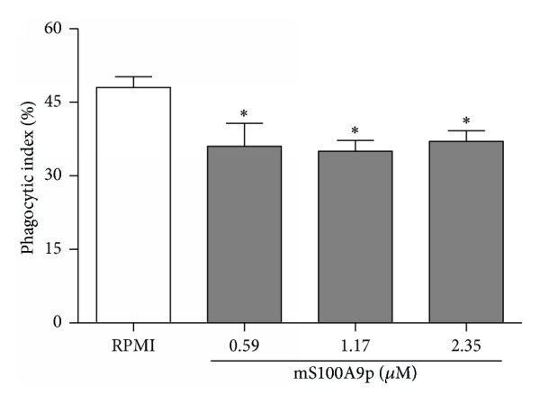 (b) Phagocytic activity of BMDM cocultivated with B-1 cells, without direct contact