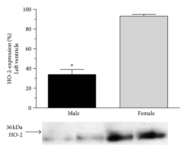 521563.fig.002a
