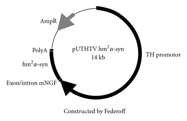 987084.fig.001a