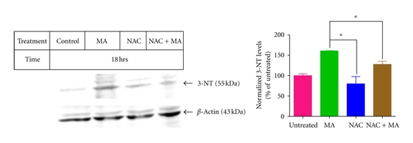 (a) Effect of NAC on 3NT levels