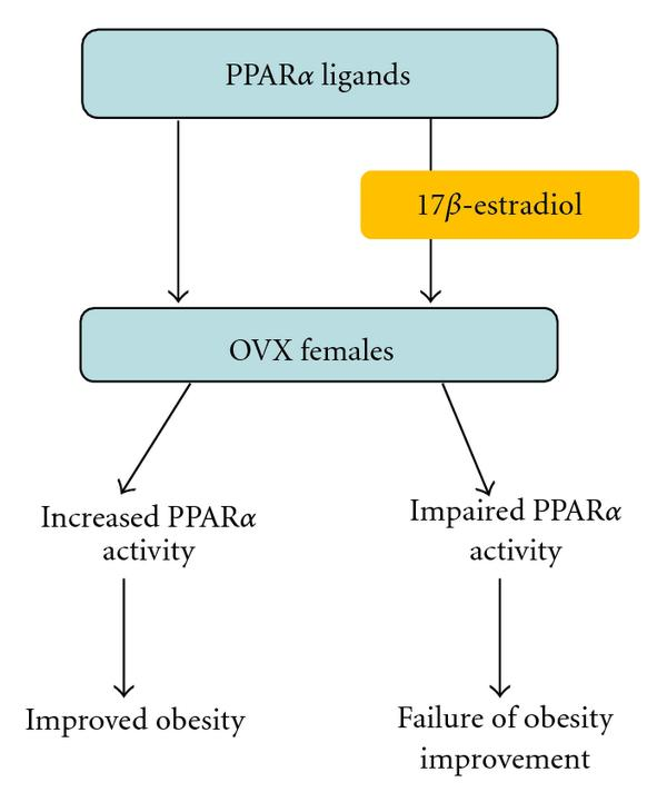 (b) Differential regulation of obesity