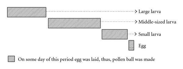 (b) Estimated date for making a pollen ball
