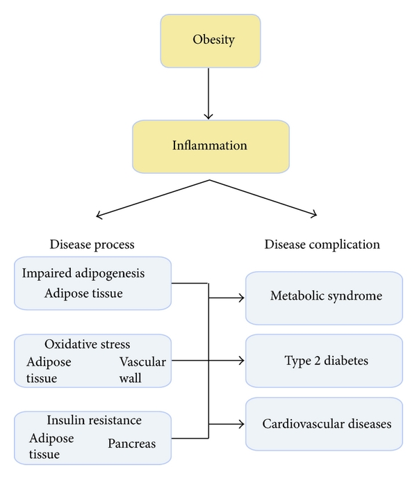 Stress In Obesity And Associated Metabolic And Cardiovascular Disorders