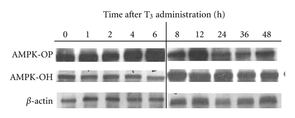 475675.fig.004a