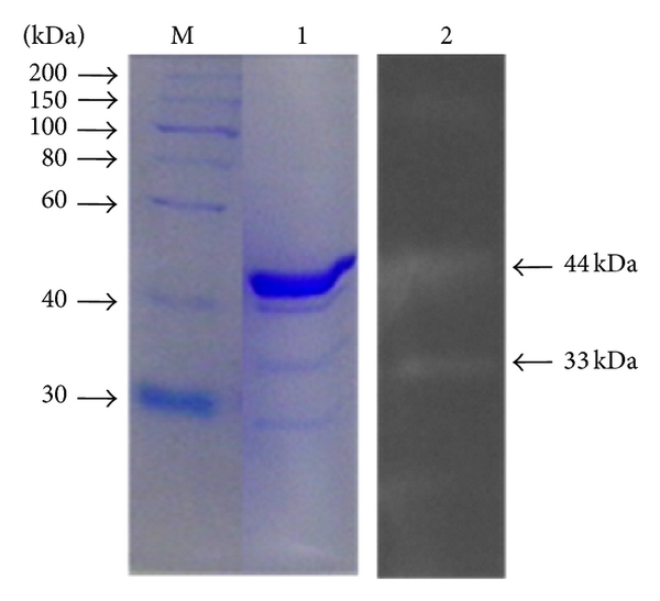 386769.fig.004