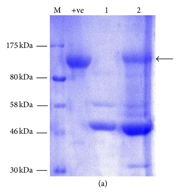 634317.fig.005a