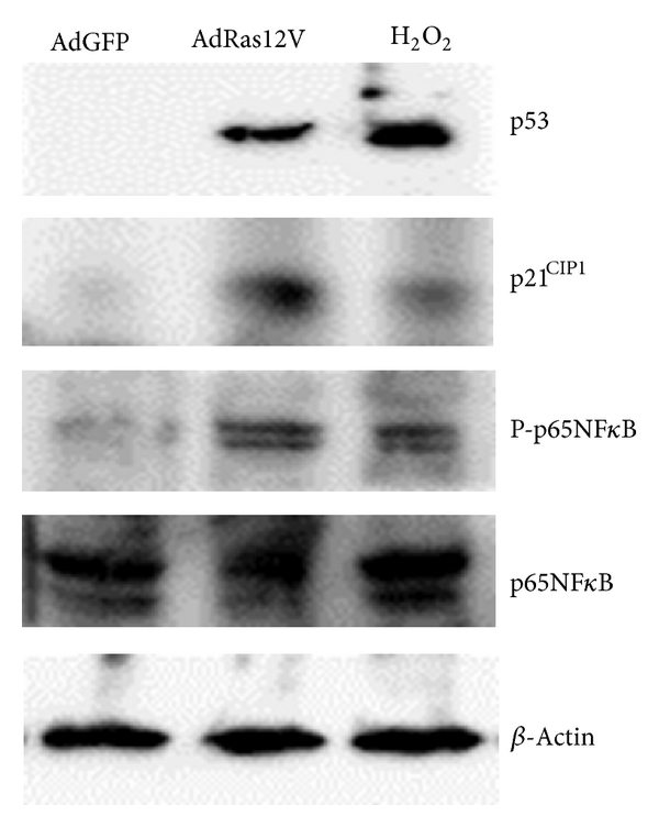 754735.fig.002