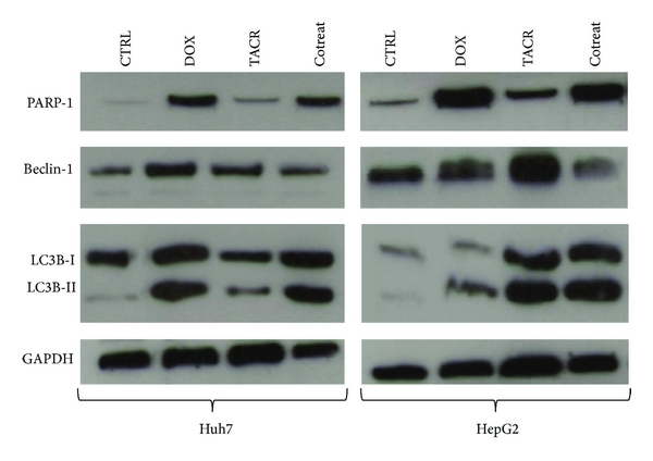 450390.fig.003